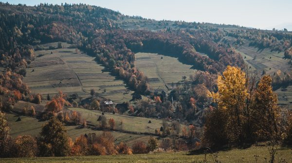 En Roumanie, la lutte contre la déforestation illégale se mène sur mobile