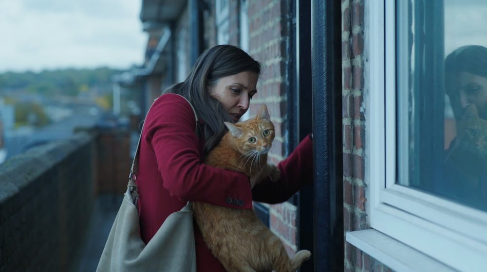 «Cat in the wall» de Mina Mileva et Visela Kazakova